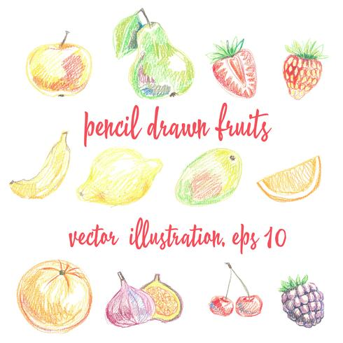 Set of pencil-drawn fruits and berries. Freehand drawing