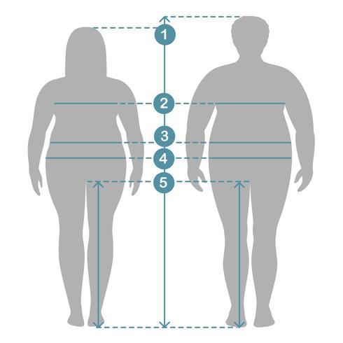 Silhuetas de homem com excesso de peso e mulheres no comprimento total com linhas de medição de parâmetros do corpo. Homem e mulher roupas mais medidas de tamanho. Medidas e proporções do corpo humano.