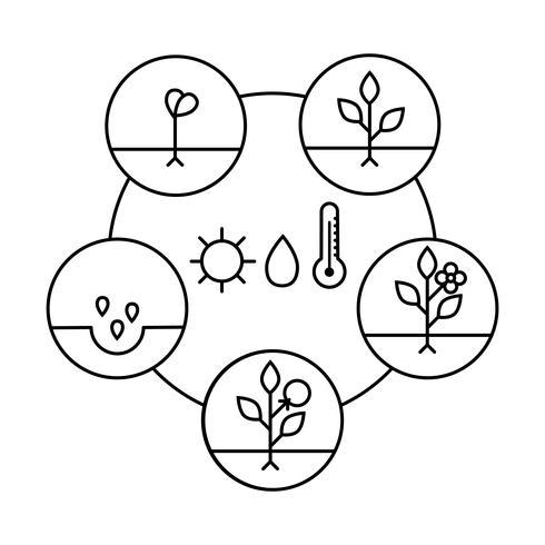 Plantengroei fasen. Lijn kunst pictogrammen. Lineaire stijlillustratie die op wit wordt geïsoleerd. Groenten planten, groenten verwerken. Platte ontwerpstijl.