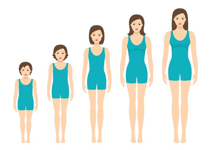 Women's body proportions changing with age. Girl's body growth stages.  vector