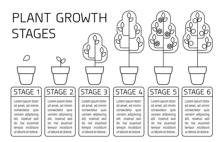 Infografía De Las Etapas De Crecimiento De Las Plantas