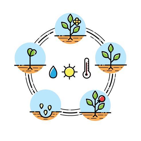 Pflanzenwachstumsstadien Infografiken Pflanzen von Obst und Gemüse verarbeiten. Flacher Stil vektor