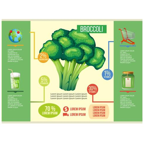 broccoli infographic vector