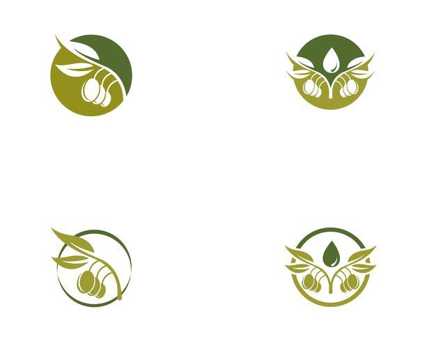 Olive Logo Vorlage Vektor Icon