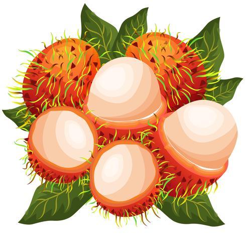 illustration vectorielle de ramboutans
