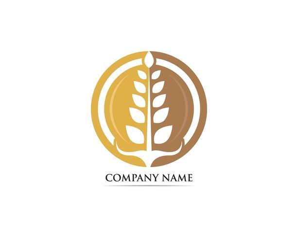 Plantilla de vector de logotipo de comida de trigo