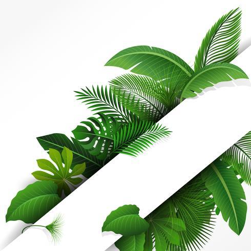 Firmar con el espacio de texto de hojas tropicales. Adecuado para el concepto de naturaleza, vacaciones y vacaciones de verano. Ilustración vectorial