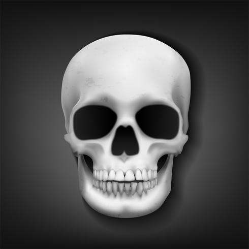 Testa del cranio realistico su sfondo scuro, illustrazione vettoriale