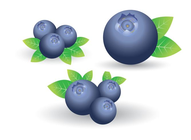 Set of blueberry isolated on white vector