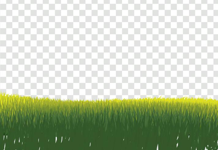 Green Grass Border, Isolated on Transparent Background, With Gra