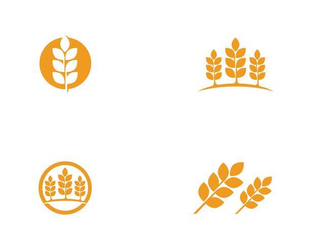 Logos de trigo de agricultura vector