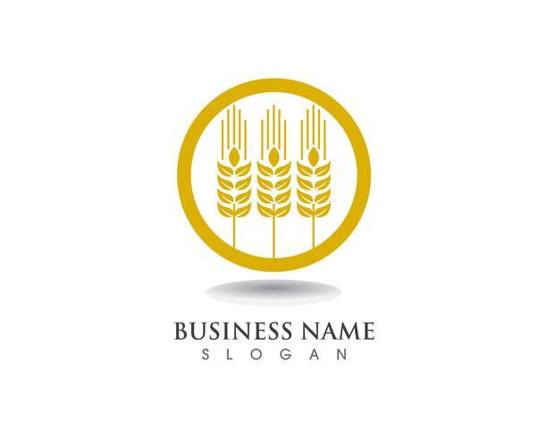 Diseño de icono de vector de plantilla de logotipo y símbolo de trigo