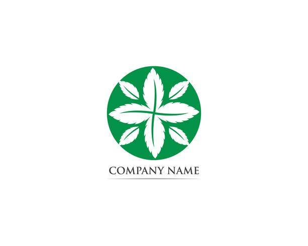 Logotipo de folha de hortelã e símbolo vector