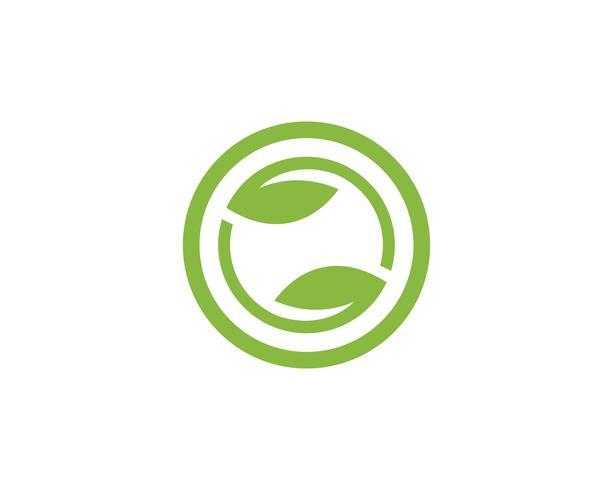 Tree Leaf green Vector icon Modelo de design de ilustração