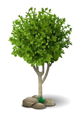 Petit arbre à feuilles caduques vecteur