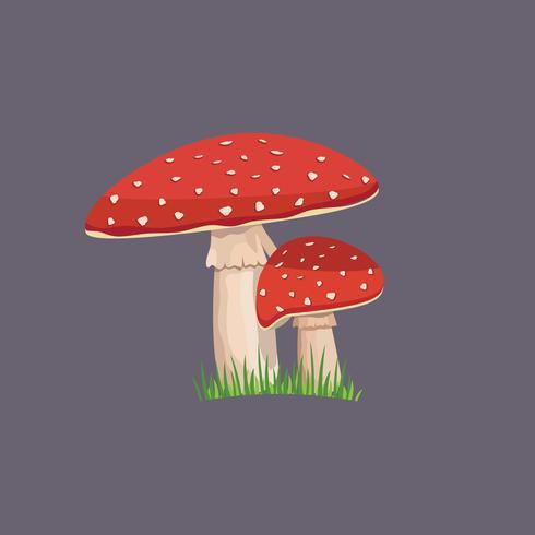 Amanita mushroom with green grass