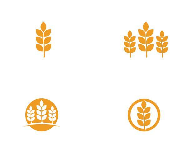 Logos de blé agricole