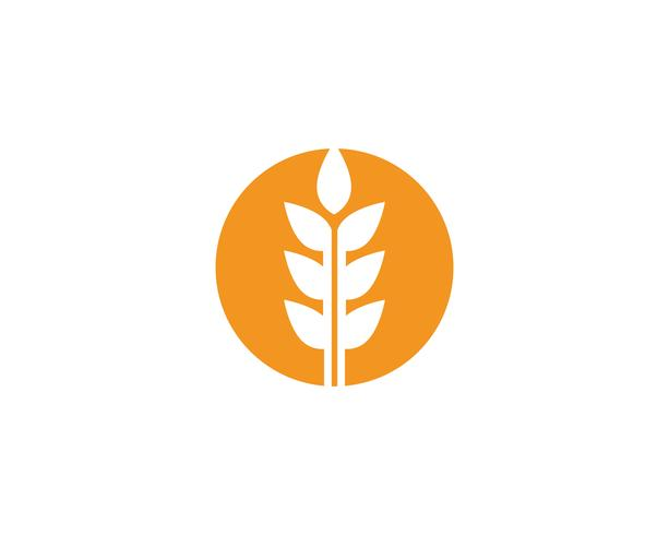 Plantilla de vector de logotipo de trigo