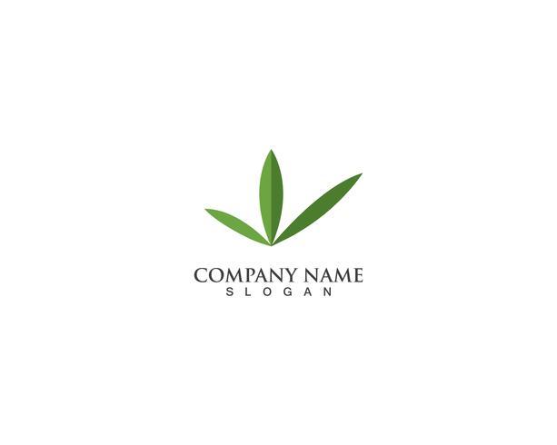 hoja verde naturaleza logo vector