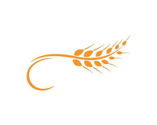 Modèle de logo de blé de l'agriculture, vecteur de logo de vie en bonne santé