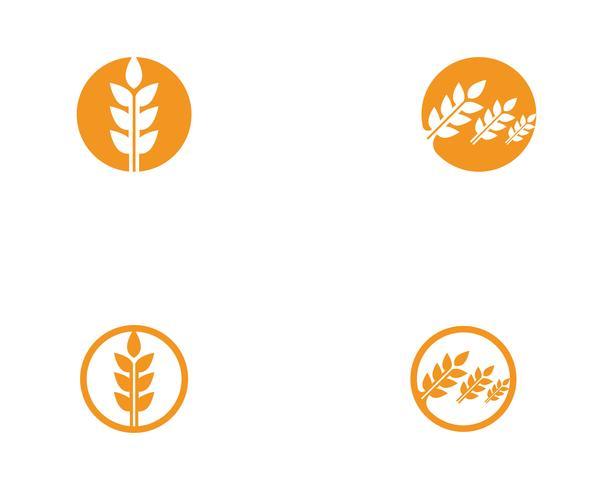 Modèle vectoriel de blé logo