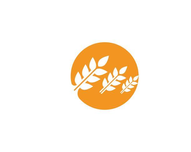 Modello di vettore di logo di grano