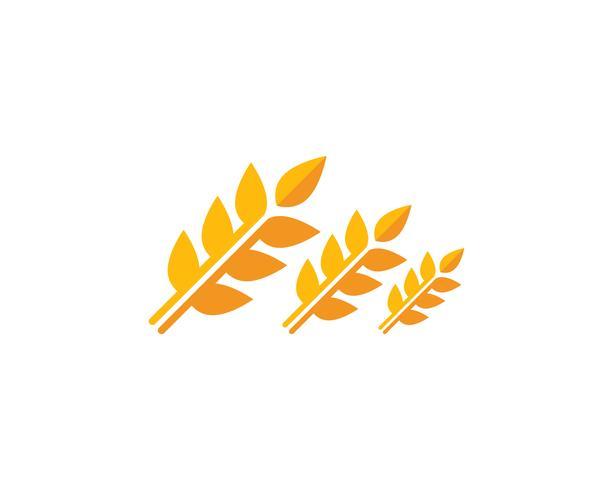 Tarwe logo vector sjabloon