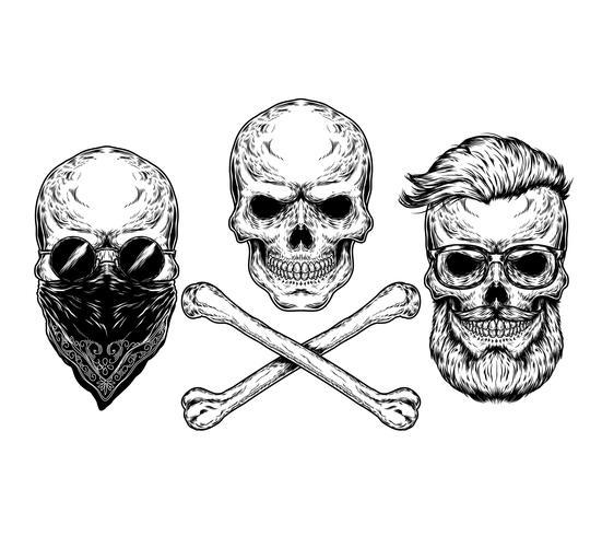 Vetorial, ilustração, de, um, cranio, e, crossbones