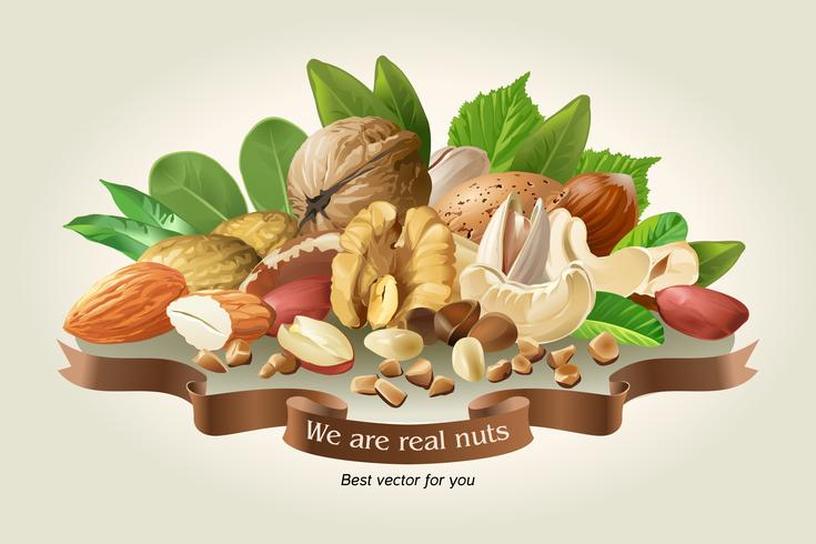 Ilustración vectorial mezcla de diferentes tipos de nueces