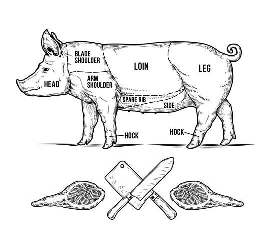 Vectorillustratie van een varken