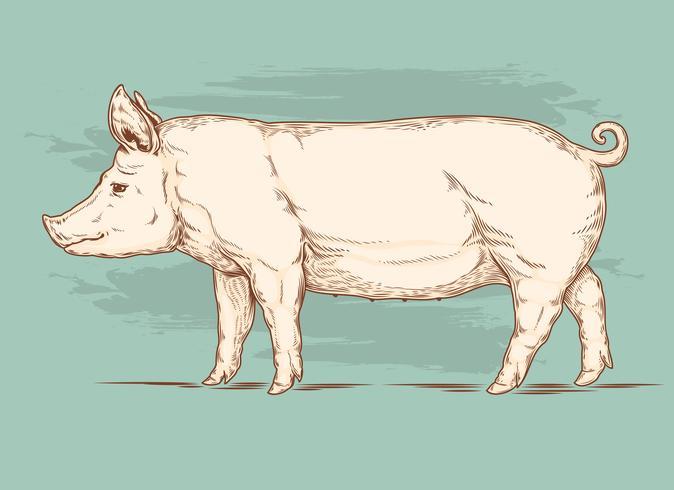 Vektorabbildung eines Schweins