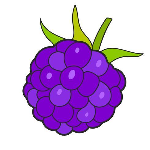 Raspberry Sketch Vector redo för din design, hälsningskort