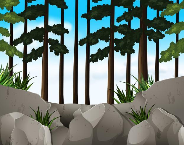 Scena della natura con cielo blu nella foresta