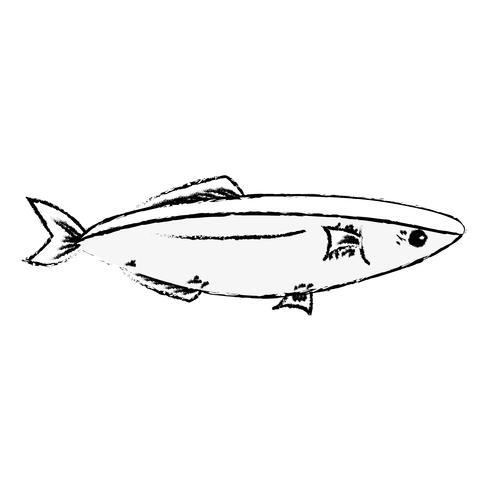 bild läckra fiskfisk med naturlig näring