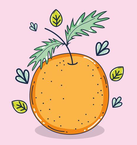 Desenhos animados de fruta laranja