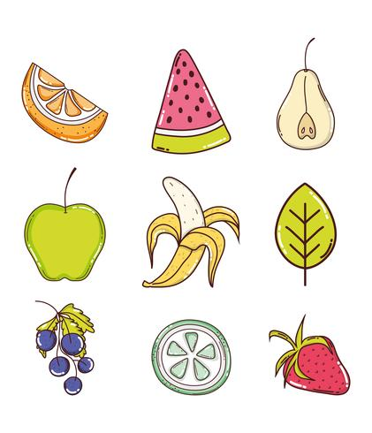 Conjunto de recogida de frutas.