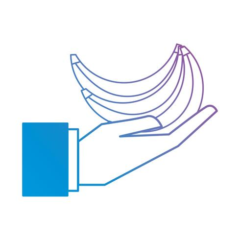 line bananas fruit in the palm hand vector