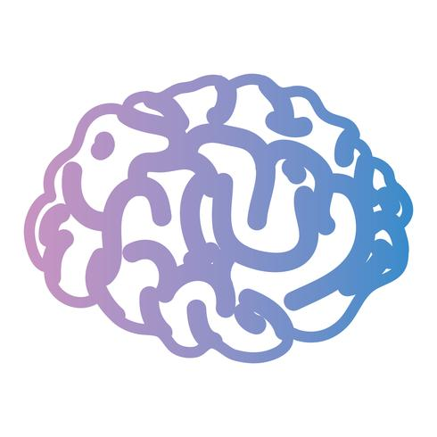 Línea anatomía del cerebro humano a creativo e intelecto. vector