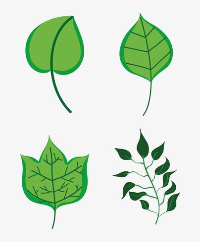 Reihe von Blättern vektor