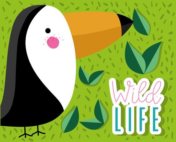 Netter Vogel der tucan wild lebenden Tiere