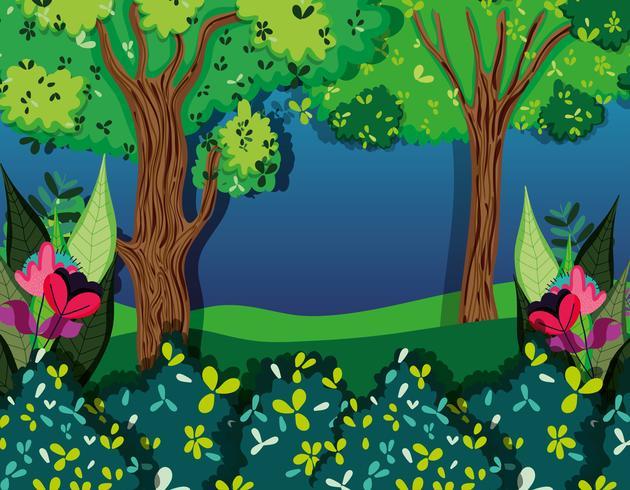 Bella foresta di notte