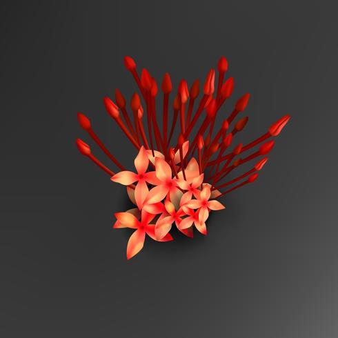 Tropische rode ixora bloemen op zwarte achtergrond