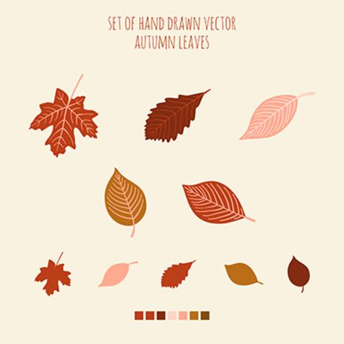 Conjunto de vector dibujado a mano hojas con paleta