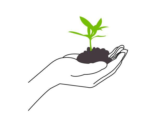 Planta crescente em mãos