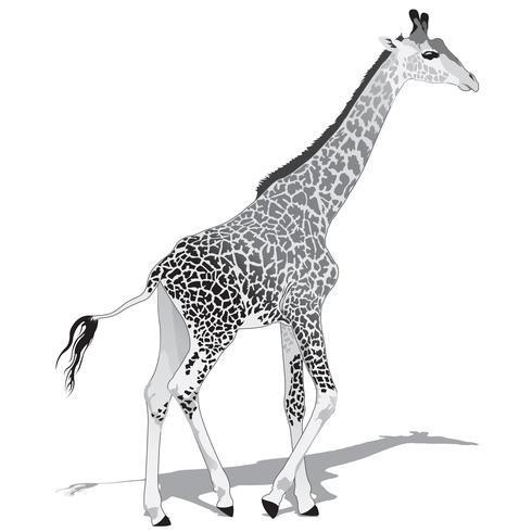 Girafa Africano BW