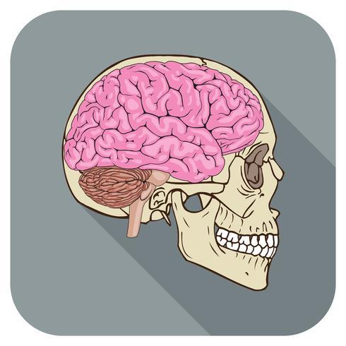 brainiac pictogram grijs