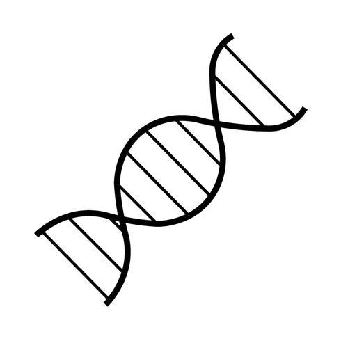 Un ácido desoxirribonucleico