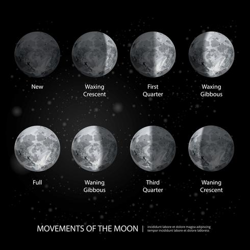 Movements of the Moon Phases Realistic Vector Illustration