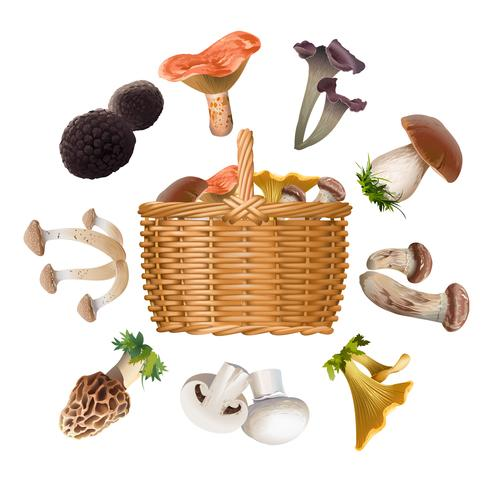 Collection of various species edible mushrooms and basket