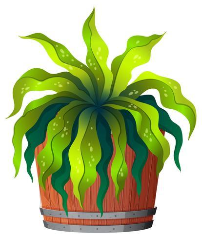 Een groene plant in pot
